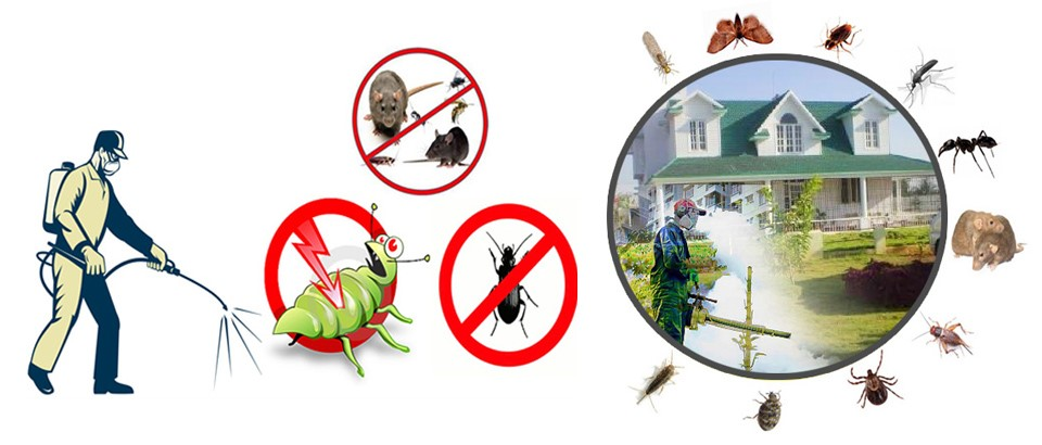 Pest-control-in-Melbourne