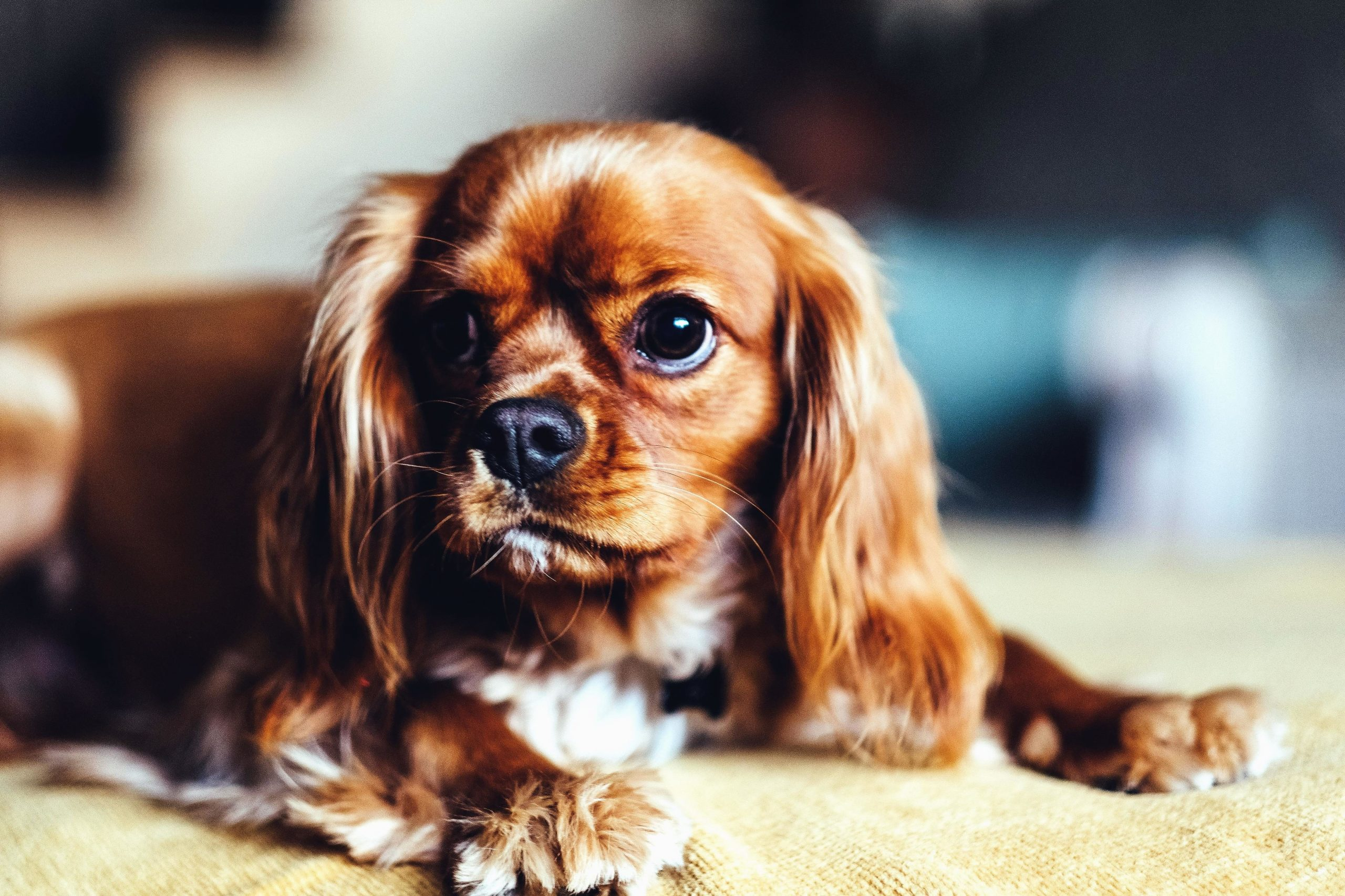 What Are 5 interesting Facts About Dogs